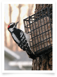 Wild Bird Suet Feeder