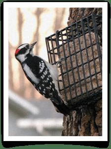 Wild Bird Suet Feeder
