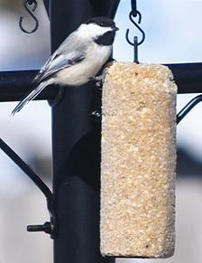 Ready to Use Wild Bird Food