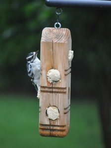 Suet and Suet Dough Plug Feeder