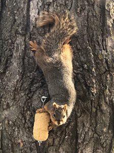 Squirrel Feeding Products